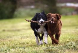 5 conseils pour soulager la douleur arthritique de votre chien