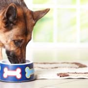Guide d'achat de nourriture pour chiens