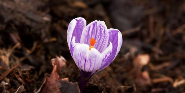 Conseils de jardinage sensationnels avec le paillis