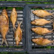 La clé d'une longue vie : manger plus de poisson