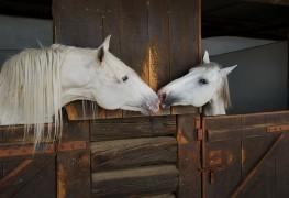 Pointeurs pour abriterconfortablement vos chevaux detrait