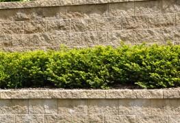 Pour des arbustes en pleine santé