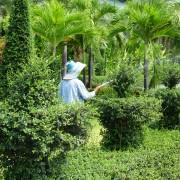 7 techniques de base pour un jardinen santé et sans maladie
