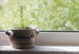 8 conseils utiles pour garder des plantes d'intérieur en bonne santé
