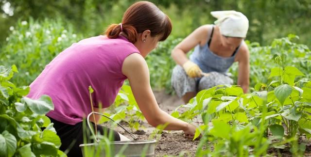 8 trucs pour étiqueter les plantes de votre jardin