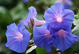 7 conseils de pro pour faire pousser des fleurs annuelles