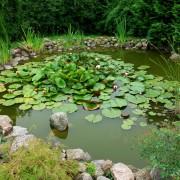 Conseils pour installer un bassin d'eau dans votre jardin