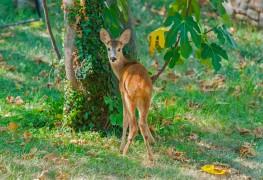 7 tactiques pour garder les cerfs loin d'un jardin