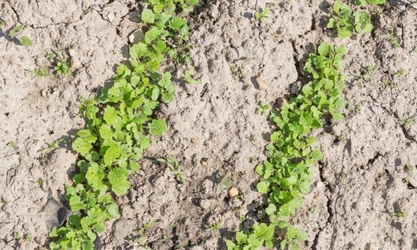 7 choses à savoir sur le jardinage avec un sol argileux