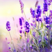 7 astuces de bouturagepour fructifier vos plantes préférées
