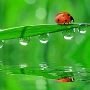 7 façons d'entretenir votre jardin avec des insectes bénéfiques