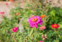 7 façons de faire de votre jardin désertique un véritable oasis