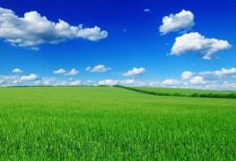 Créer une pelouse à partir de rien
