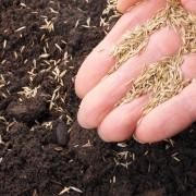 Conseils pour la semencede graines à l'aide d'articles ménagers