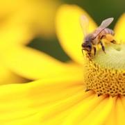 Attirer les insectes bénéfiques dans votre jardin
