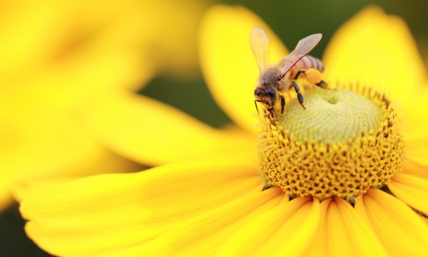 attirer les insectes b n fiques dans votre jardin trucs pratiques. Black Bedroom Furniture Sets. Home Design Ideas
