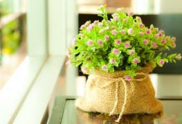 Cultiver des bulbes pour une floraison intérieure en 4 étapes faciles