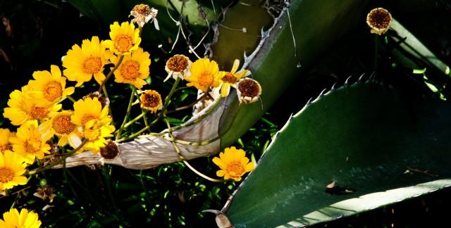 Astuces pour le soin des boutures de jardin