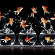 Comment prendre soind'un poisson rouge