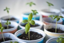8 conseils de semences en intérieur