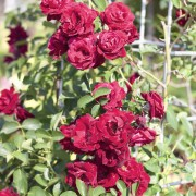 8 astuces pour protéger votre jardin du givre