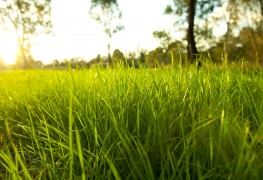 Les 4 règles pour une pelouse plus verte et plus saine