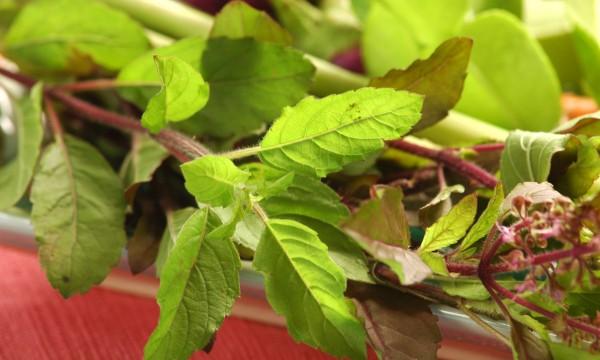 Utilisez toutes les parties d'une plante