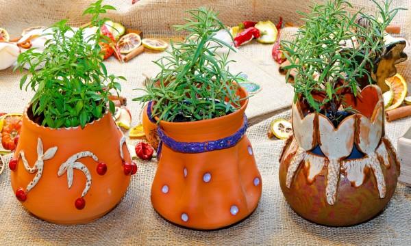 Conseils pour bien arroser vos plantes
