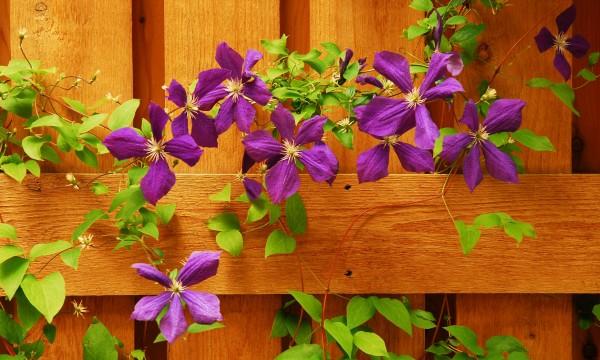 Prendre soin de vos plantes grimpanteset de vos bulbes de saison