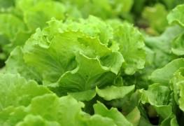 Légumes-feuilles sains pour rehausser vos salades