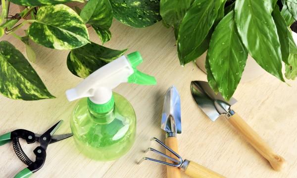 2 insecticides maison pour garder les parasites à distance