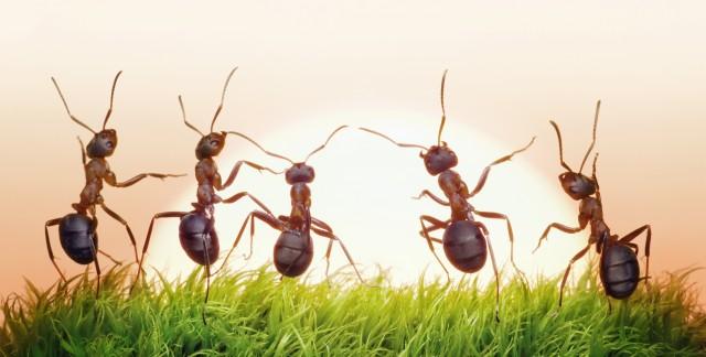 Solutionsmaison pour se débarrasser des insectes et des souris