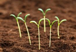 Faire pousserdes graines ou des semencessaines et fortes