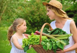 Apprenez à cultiver de la laitue bio de façon écologique