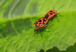 Infos utiles : plantes et insectes bénéfiques pour votre jardin