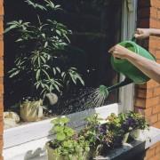 9 idées pour protéger vos plantes de la sécheresse