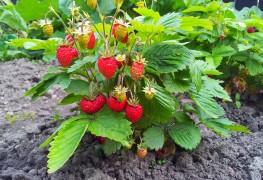 9 conseils pour des fruits en abondance dans votre jardin