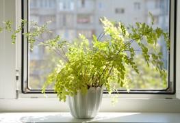 Comment garder les plantes en vie en votre absence