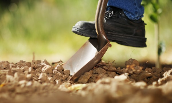 8 façons originales de se faire un beau jardin
