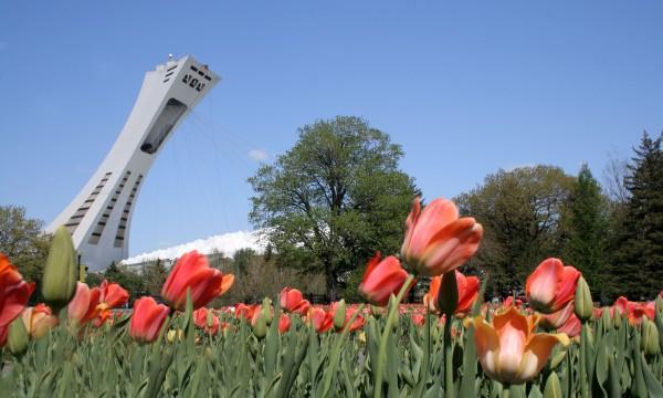10 des plus beaux parcs de Montréal