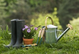 Guide pour débutant: faire pousser un jardin biologique