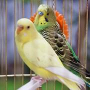 Conseils pour choisir une cage à oiseaux