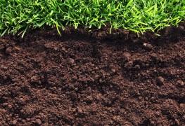 Conseilsde jardinage essentiels: apprenez à connaître votre type de sol
