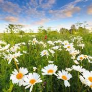 6 conseils pour planter des fleurs sauvages