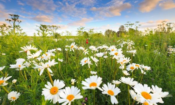 6 conseils pour planter des fleurs sauvages trucs pratiques. Black Bedroom Furniture Sets. Home Design Ideas