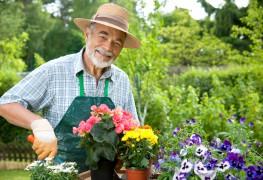 48plantes annuelles faciles et décoratives