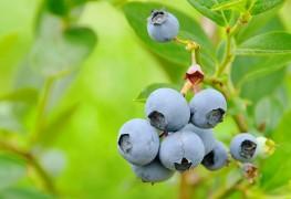 Comment prendre soin des plantes fruitières