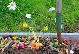 6 choses àsavoir avant d'installer un bac à compost dans votre jardin