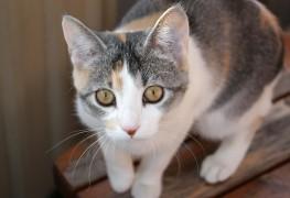Allergies alimentaires chez les chats, surprenantes mais communes