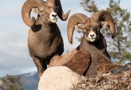 Les meilleurs endroits au Canada pour observer la faune